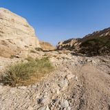 Stone desert in Israel Royalty Free Stock Image