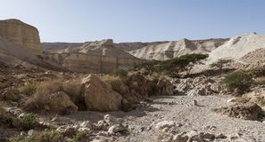 Stone desert in Israel Royalty Free Stock Images