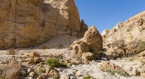 Stone desert in Israel Stock Images