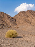 Stone desert Royalty Free Stock Images