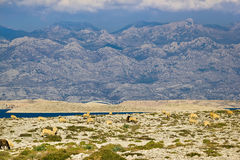 Stone desert under Velebit mountain Royalty Free Stock Photography