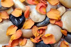 Stone and dried rose petal Stock Images