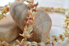 Stone and dry jasmine flower for skin spa Stock Photos