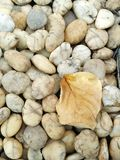 Stone and dry leaf. Royalty Free Stock Photo