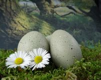 Stone eggs on natural moss ground with daisies stock photo