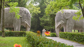 Stone elephants. The stone elephants are featured by simplicity and vividness.Elephants were placed on the sacred way of imperial tombs as early as in the Easter Stock Image