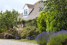 Stone english house with lavender, pear tree in front garden Royalty Free Stock Photography