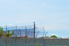 Stone fence with barbed wire and  bird Royalty Free Stock Image