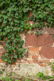 Stone fence with creeper Royalty Free Stock Image