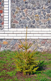Stone fence and Christmas tree Royalty Free Stock Photography