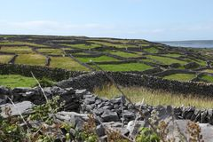 Stone fence on inisheer island on aran islands in Ireland. Old stone fences on inisheer island on aran islands in Ireland Stock Image