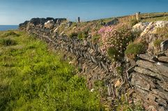 Stone Fence near Tintagel Cornwall. Herringbone stone fence near Tintagel Cornwall. Tintagel or Trevena (Cornish: Tre war Venydh meaning village on a mountain) Royalty Free Stock Image