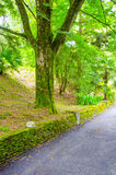 Stone fence beside the road. The road with stone fence passes tree Royalty Free Stock Photo