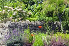 Free Stone Fence, Roses, Flowers In Bloom In A Summer Garden . Stock Photos - 110469453