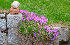 Stone fencing overgrown with flowers Royalty Free Stock Photo