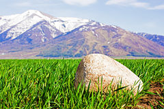 Stone on field with winter crops Stock Photography