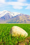 Stone on field with winter crops Royalty Free Stock Image