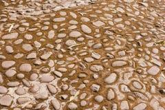 Stone floor backgrounds,moss dry Stock Photo