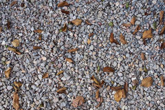Stone floor in the garden. With leave Royalty Free Stock Photography