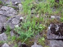 Stone flora stock photos
