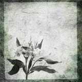 Stone flower Royalty Free Stock Images