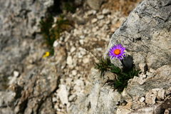 Stone flower Stock Photos