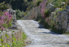 Stone Flower Path. Stone path decorated by purple flowers in Malta - way to paradise Royalty Free Stock Photography