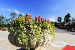 Stone flower pot Stock Photography