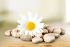 Stone Flower Stock Image