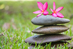 Stone and flower Royalty Free Stock Photography