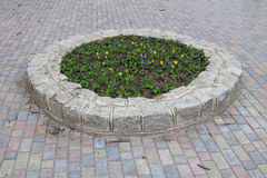 Stone flowerbed on the sidewalk. Stone flower bed with flowers on the sidewalk Stock Photos