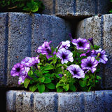 Stone Flowerbed Wall Stock Images