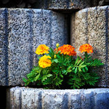 Stone Flowerbed Wall Royalty Free Stock Image