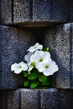 Stone Flowerbed Wall Stock Photo