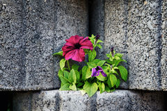 Stone Flowerbed Wall Royalty Free Stock Images