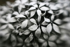 Stone Flowers. Gravestone with carved flowers and selective focus Royalty Free Stock Photos