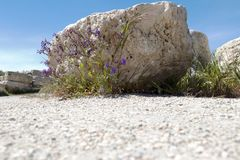 Stone with flowers from Chersonesos. Ruins of a well in an ancient fortress in the Chersonese. Sevastopol, Crimea Stock Photos