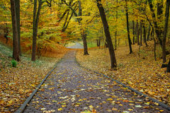 Stone footpath in autumn city park with yellow fallen leaves Royalty Free Stock Images