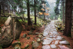 Stone Footpath in Autumn Mountain Forest Royalty Free Stock Photography