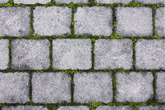 Stone footpath with moss Stock Photos