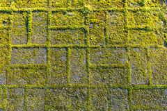 Stone footpath with moss, close up image