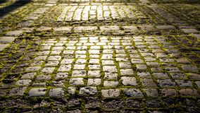 Stone footpath with moss in the morning sunlight. Fairy, magic, mystical background. Close up image stock images