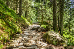 Stone footpath between the trees in the mountains Royalty Free Stock Photos
