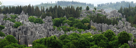 Stone forest. In Yunnan Province, China Stock Photography
