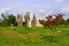 Stone Forest Stock Images