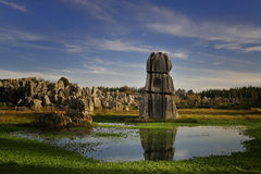 Stone Forest Royalty Free Stock Photos