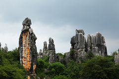 Stone forest Royalty Free Stock Image