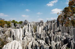Stone forest. China's National Park, Yunnan, China Stock Image