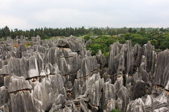 Free Stone Forest Royalty Free Stock Photos - 6413748