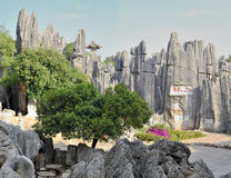 Stone forest. Yunnan, China singular nature of the geographical wonders Stock Photography